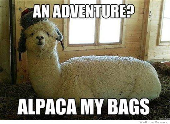 an-adventure-alpaca-my-bags