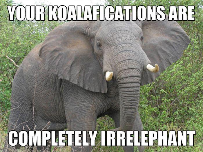 Elephant_Memes.jpg