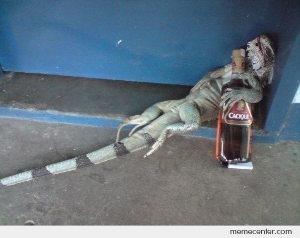 La-Iguana-raptor-drunks_o_43315