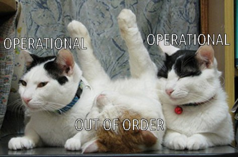 operational-operational-out-of-order-cat-meme.jpg
