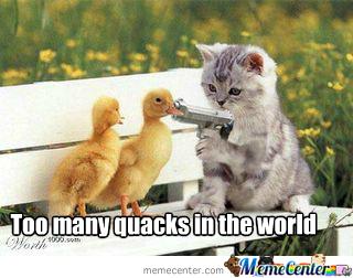 so-many-quacks_o_1678327